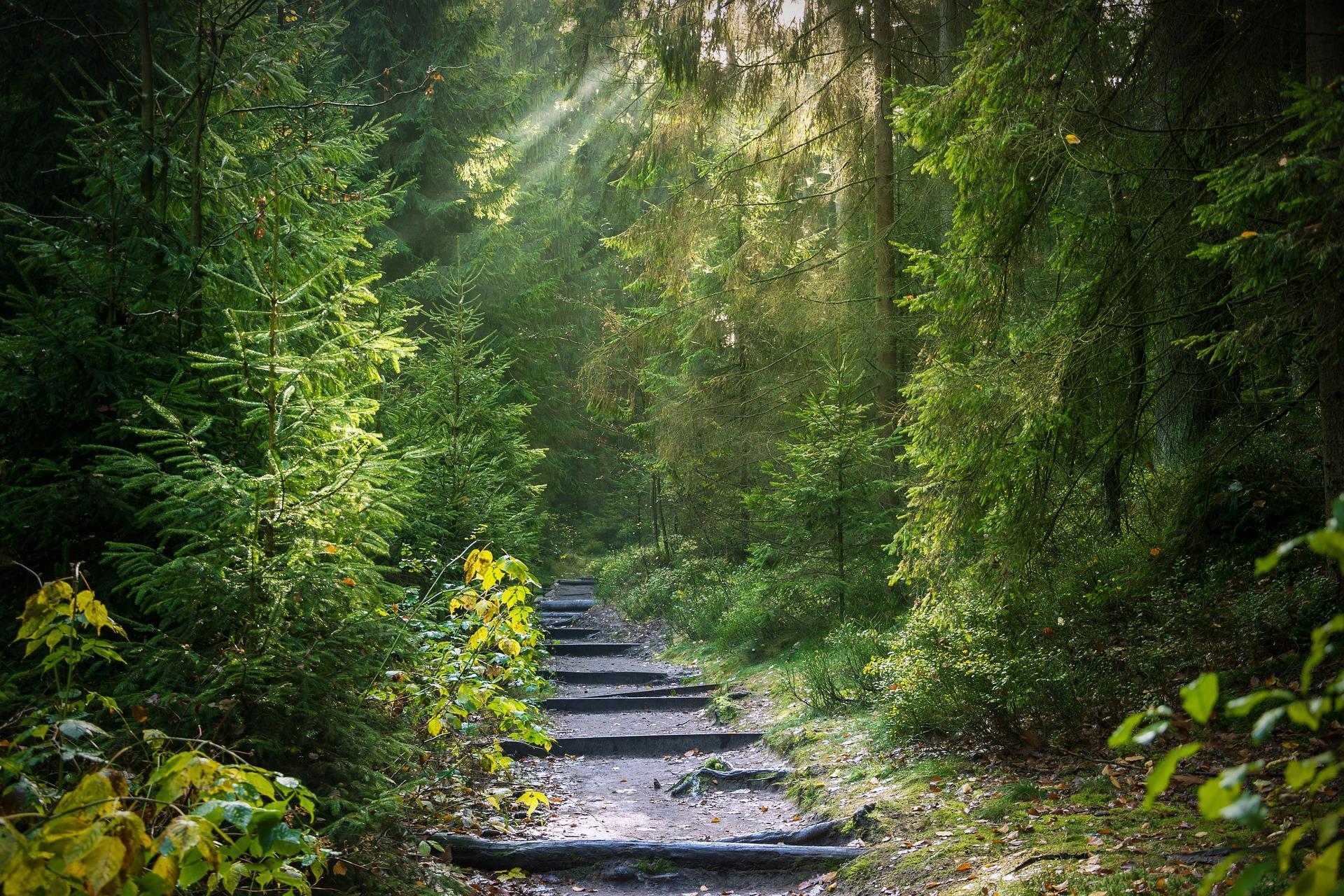 Waldweg zeitfinden.yoga