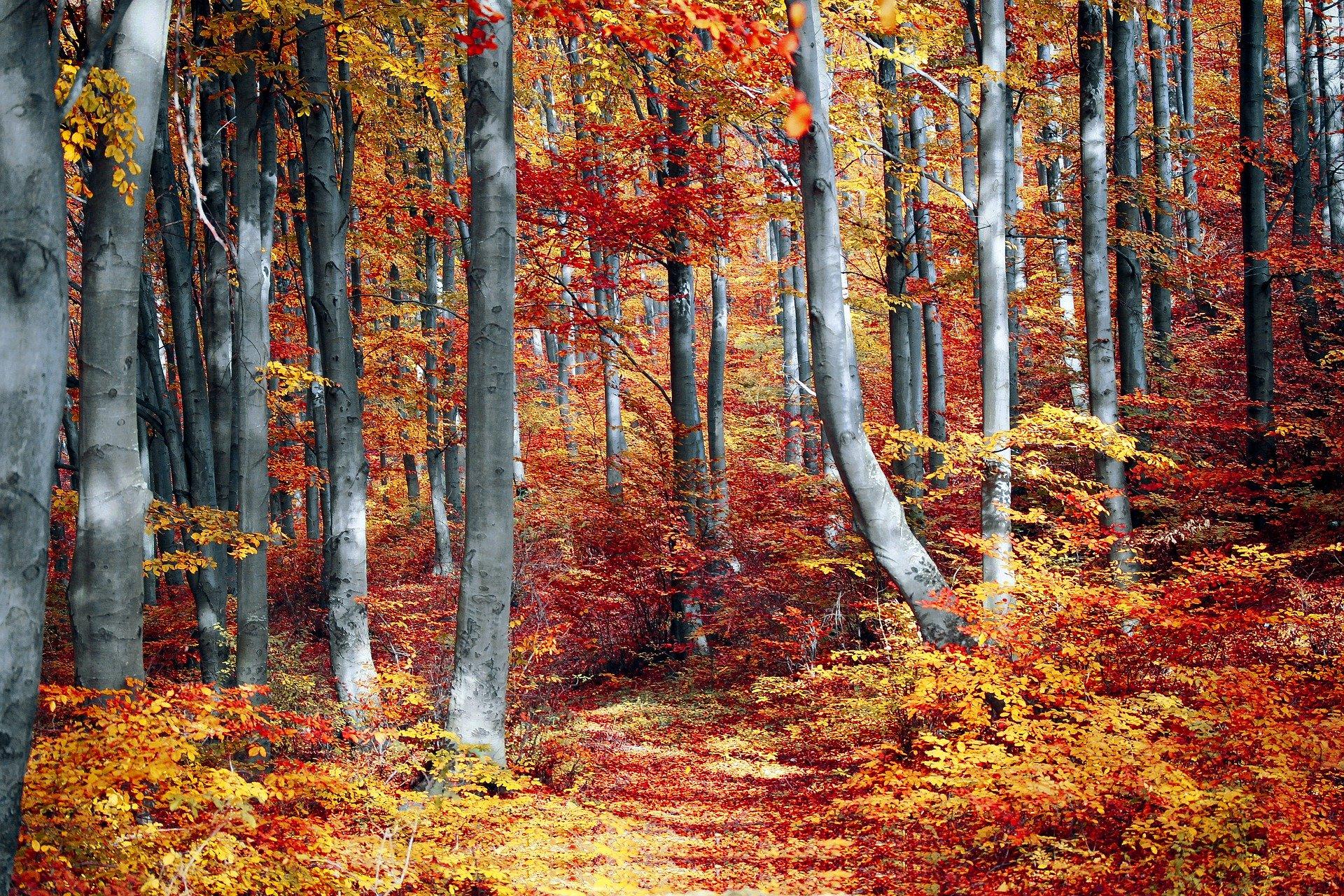 Herbst Waldbaden